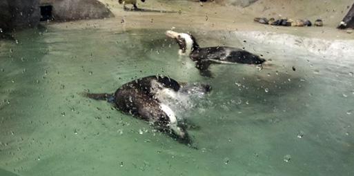 Jenkinson's Aquarium Penguin Exhibit